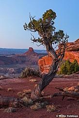 Canyonlands Juniper Tree 040517 3259