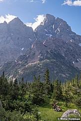 Bull Moose Cascade Canyon 081219 3142 3