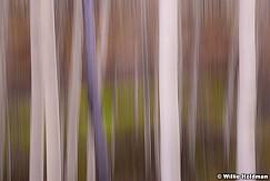 Aspen Abstract 051815 0725