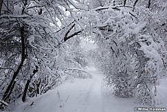 Snow Path 010517 9115 5