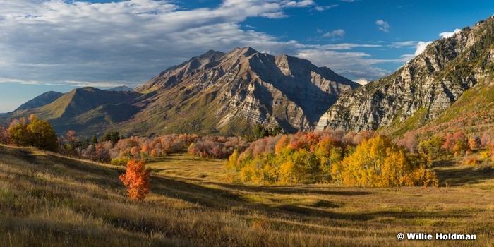 Timpanogos Cascade Meadows 093016 8863