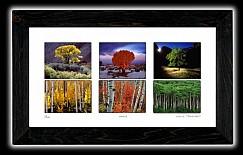 series 6 trees