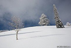 Frosty Pines 122616 8511 5