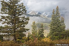 Pines fog 092216 5036 4