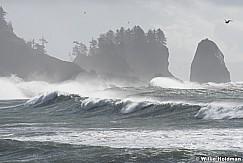 La Push Waves 102916 8661