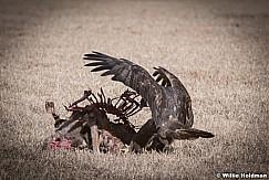 Eagle Feast 121517 4884