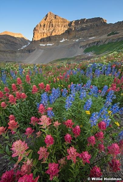 Timpanogos Wildflowers 080116 7009