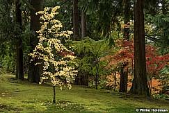 Japanese Garden 102716 7406