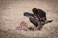 Golden Eagle Feast 121517 4896