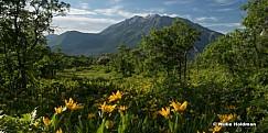 Timpanogos Spring time Flowers 061816 5569 7F 1