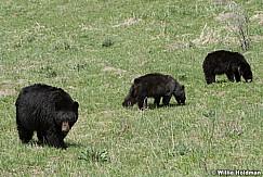 Black Bear Cub 050817 4804