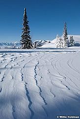 windblowndeervalley040710 1916