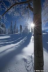 sunburstpine122410 95