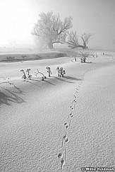 WintertracksBW022009 2064