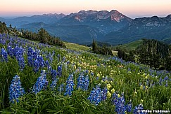 American Fork Canyon Wildflowers 071516 7575 1