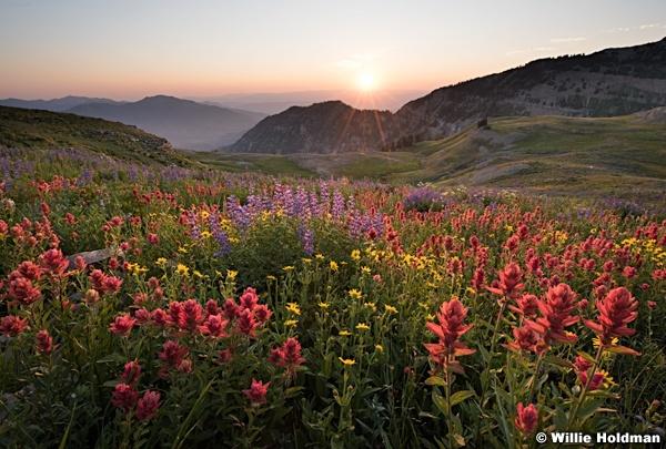 Timpanogos Sunrise Wildflowers 080216 2 2