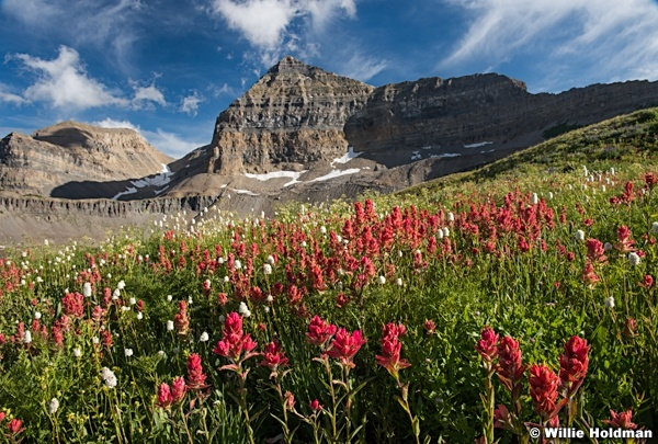 Timpanogos Basin Wildflowers 071915