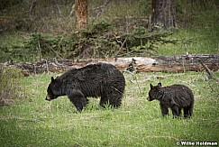 Black Bear Cub 050817 5209