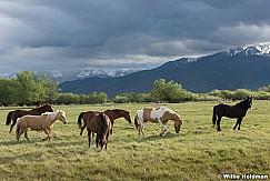 Heber North Fields Horse 051716 2
