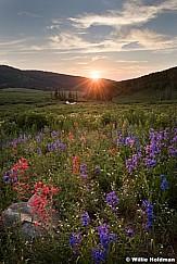 Mountain Wildflowers Sunset 071017 1232