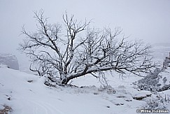 Canyonlands Snow Tree 020116 1442