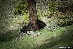 Two Cubs 050817 4913