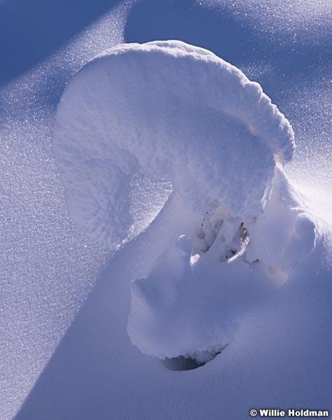 Winter Snow Horse Head 011415 5173