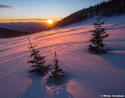 Pine Shadows Sunset 030617 95971