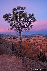 Bryce Canyon Roots 040616 4736 1 of 2