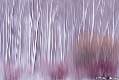 Abstract Winter Trees 031714 0376