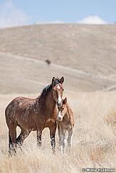 Wild Horses Colt 040320 0884 2