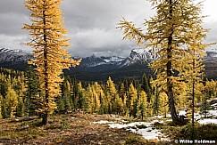 Assiniboine Larch 091915 0289