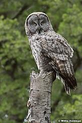 Owl 050917 6517F
