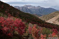 Red Maples with Timpanogos from bear canyon, Utah