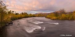 Autumn Yellows Provo River 101116 3356