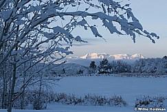 Timpanogos Snow Branches 112518 8608 6