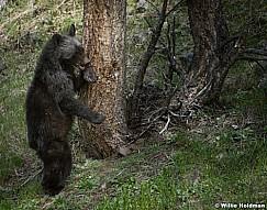 Black Bear Cub 050817 4727
