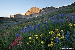 Timpanogos Wildflowers 080116 7024 2