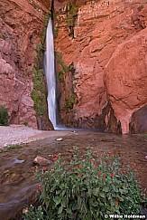 Deer Creek Waterfall Grand Canyon 041115 5741