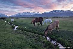 Heber Horses Sunset Spring 042819 7369