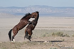 Mustang Fight 051621 9824