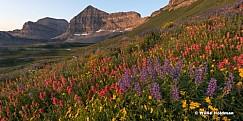 Timpanogos Sunrise Wildflowers 080216 7321 2PAN