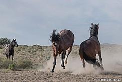 Mustang Trample 051621 9781