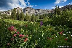 Albion Wildflowers 072412 50