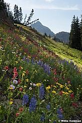 Timpanogos Wildflowers080116 6367 6369