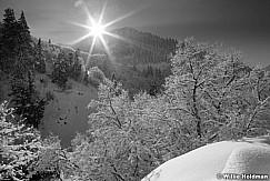 snowcoverdbranchesBW122410 37