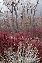 Provo Canyon Colors F 032621 7136 3