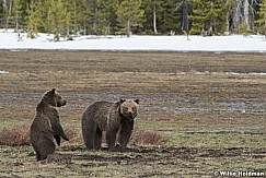 Grizzley Bear and Cub 050717 2505