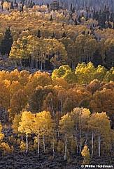 Layers of Yellow and Orange 100919 7209 3