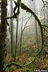 Misty Path Oregon 102616 7259